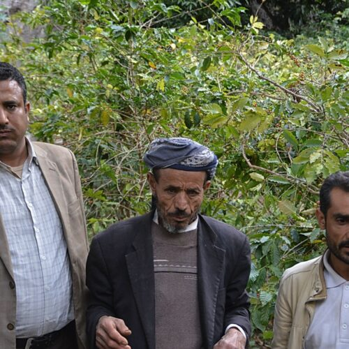 Yemen Coffee Farmer